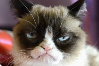 #CopyrightMadness : Steam, Marvin Gaye, Grumpy Cat...