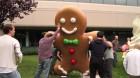 Le géant Gingerbread est arrivé au GooglePlex ! ;)