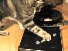 Friskies lance des applications (webapps) pour chats sur les tablettes !