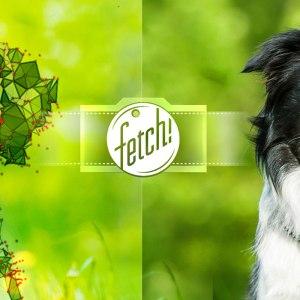 Fetch!, l'application de Microsoft pour détecter la race d'un chien