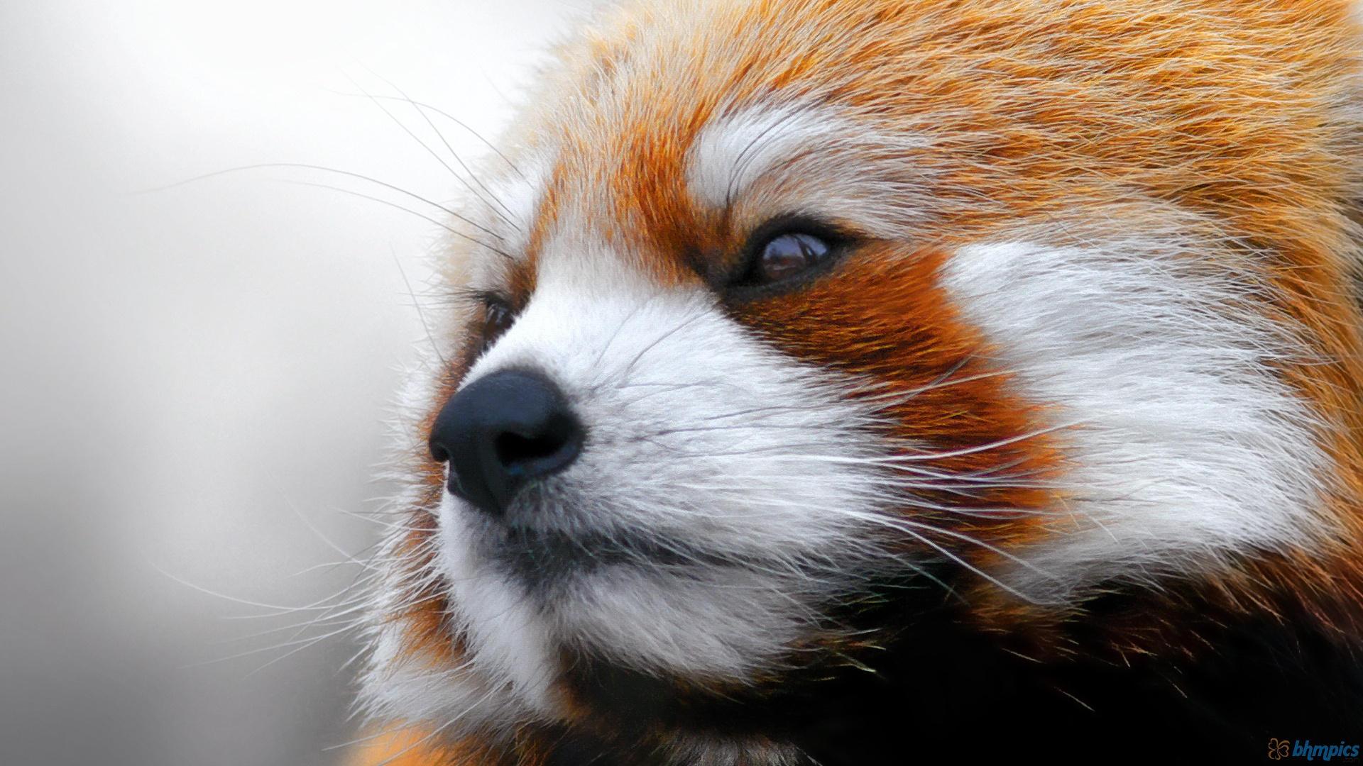 Finalement, Mozilla s'en sort mieux sans Google mais ses parts de marché restent très faibles