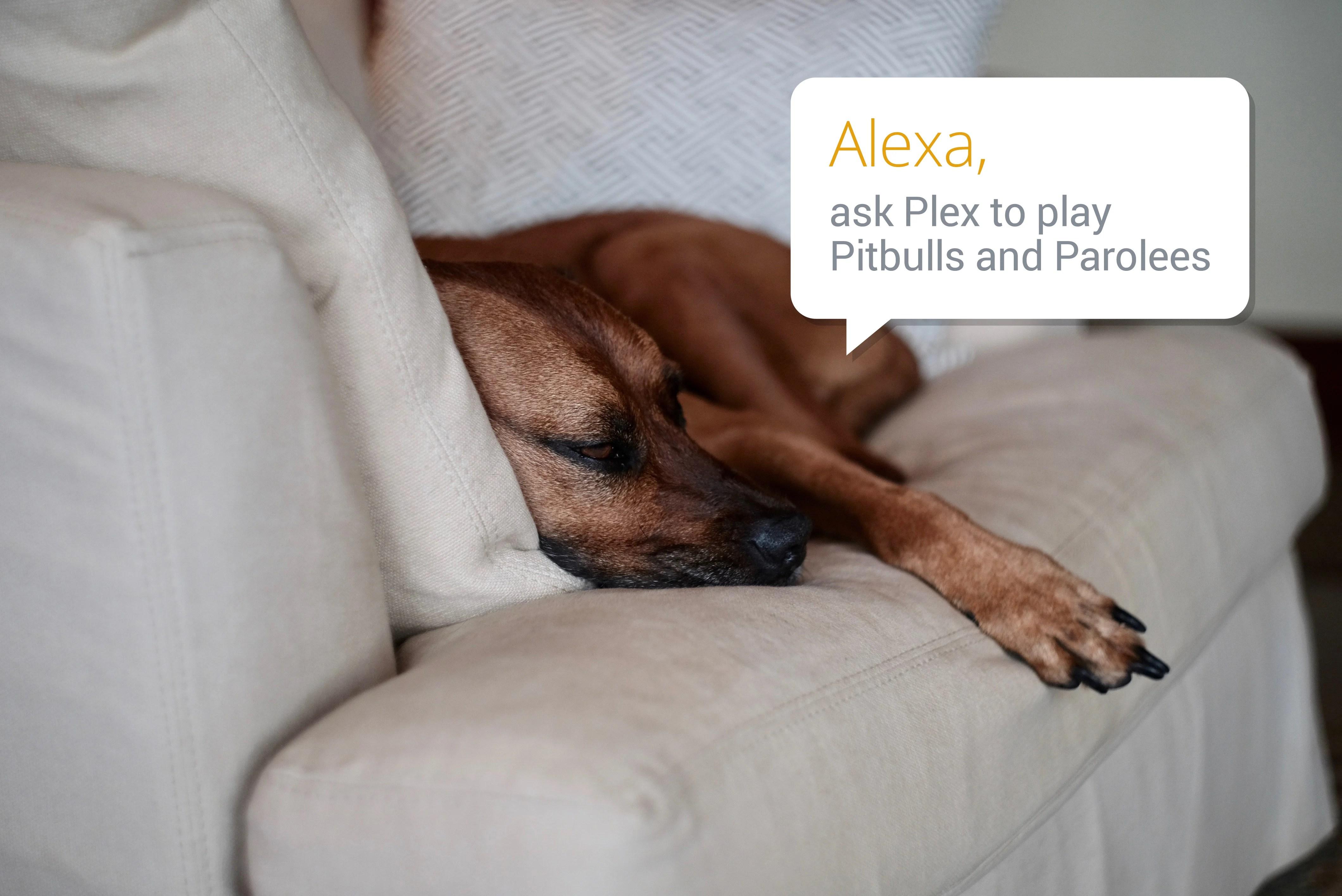 Plex pour Alexa, encore une bonne idée