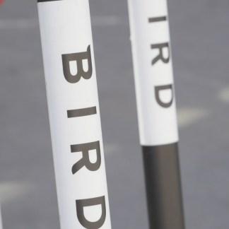 Bird incite ses utilisateurs à signaler les trottinettes mal garées