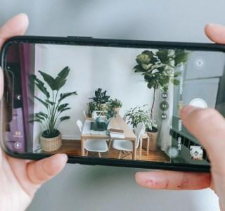 10 applications pour reconnaître les plantes et bien s'en occuper