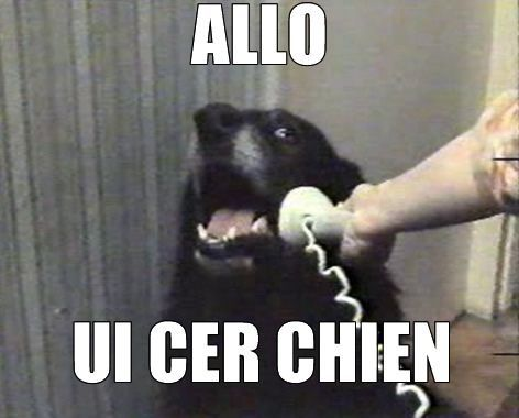 ALO UI CER CHIEN / Yes, this is dog – Mèmologie