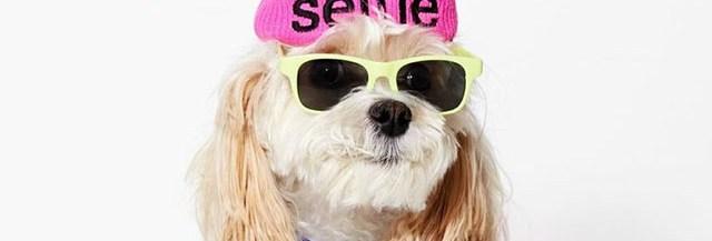 american-beagle-mode-chien