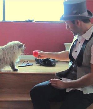chats-magie-video