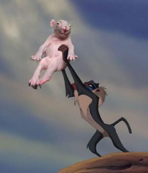 bebe-wombat-reddit-meme