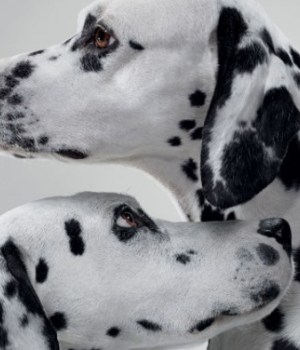 la-roche-posay-skin-checker-cancer-peau