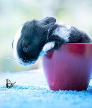 photographe-bebes-lapins