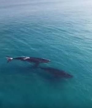 deux-baleines-paddle-rencontre