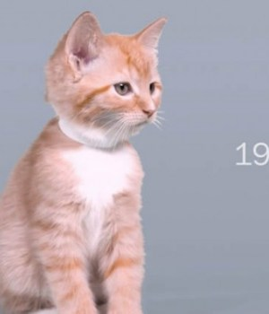 100-years-of-beauty-chatons