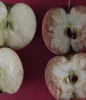 harcelement-scolaire-explique-pommes