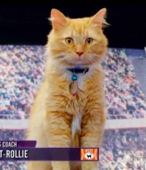 jeux-olympiques-chats