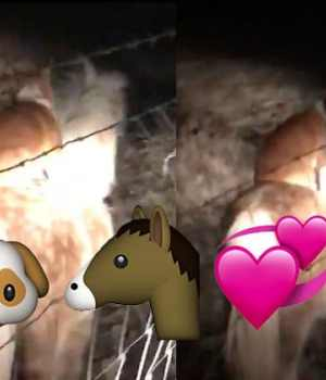 poney-corgi-video