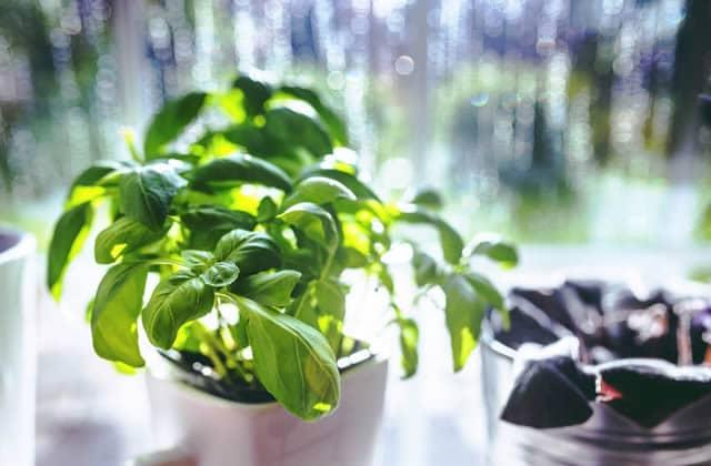 faire-pousser-herbes-aromatiques