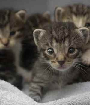 thread-chatons-sous-lit