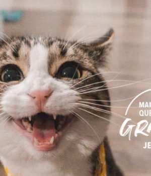 comportementaliste-felin-metier