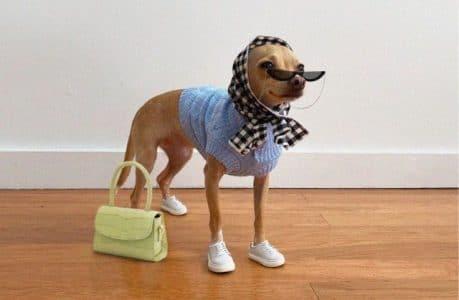 boobie-billie-chien-fashion-insta