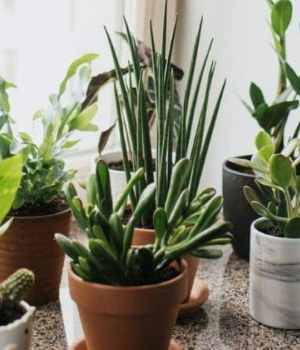 plantes-depolluantes-appartement