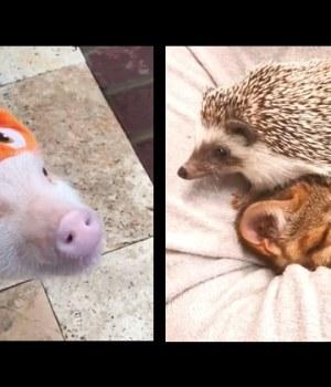 videos-droles-animaux-mignons