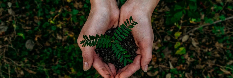plante)mains