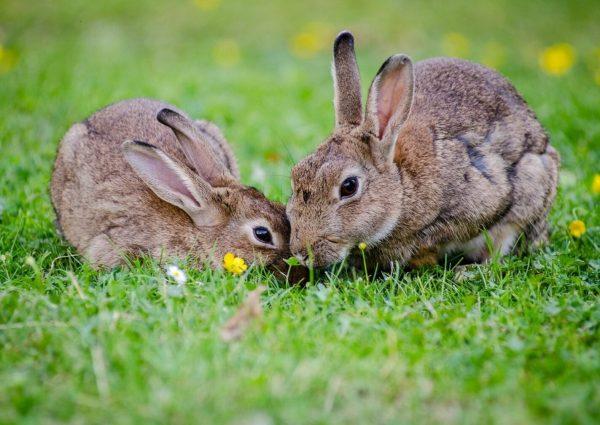 LEurope-veut-durcir-ses-lois-contre-les-tests-sur-les-animaux