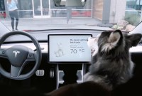 Tesla corrige son « Dog Mode » qui a failli nuire à un chien...